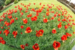 les-jardins-deau-dannevoie-en-fleurs