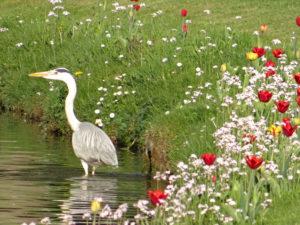 Les-Jardins-DAnnevoie-en-fleurs
